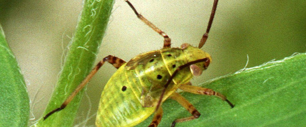 צילום: משרד החקלאות האמריקאי, שירות המחקר
